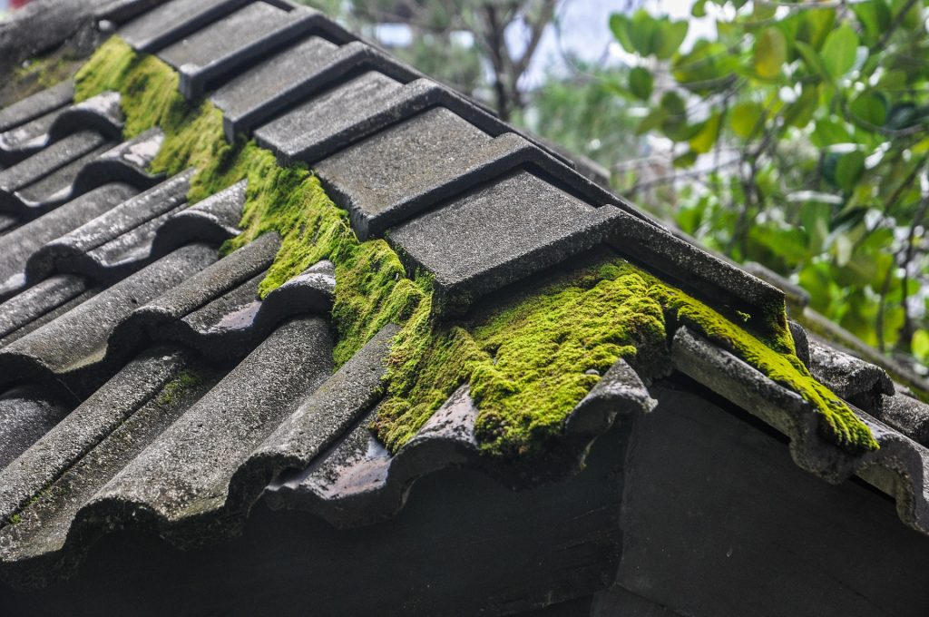 Remove moss from roof tiles